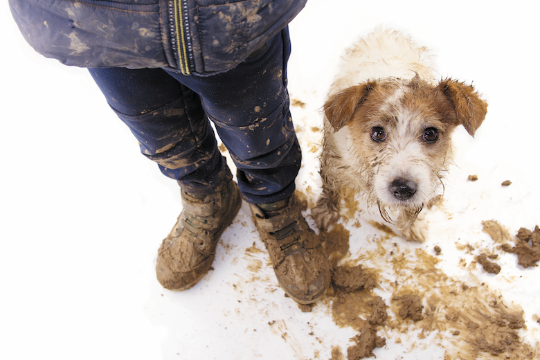 spring cleaning for dog owners