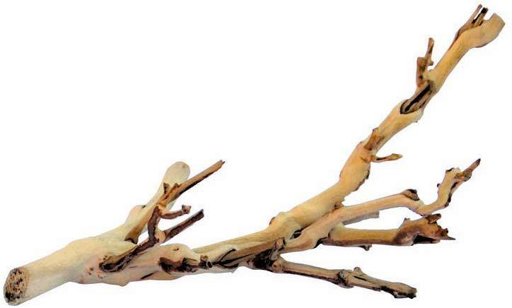exoterra branch