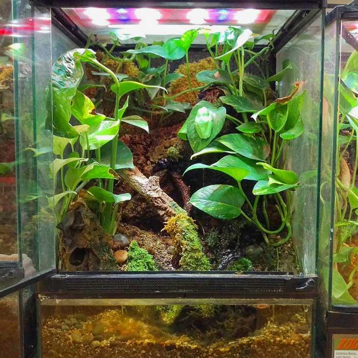 green tree frog terrarium