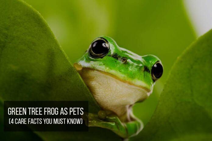green tree frog shy