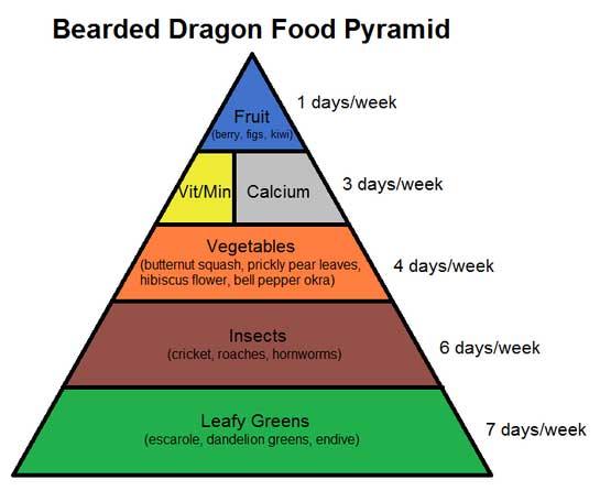 bearded dragon diet plan
