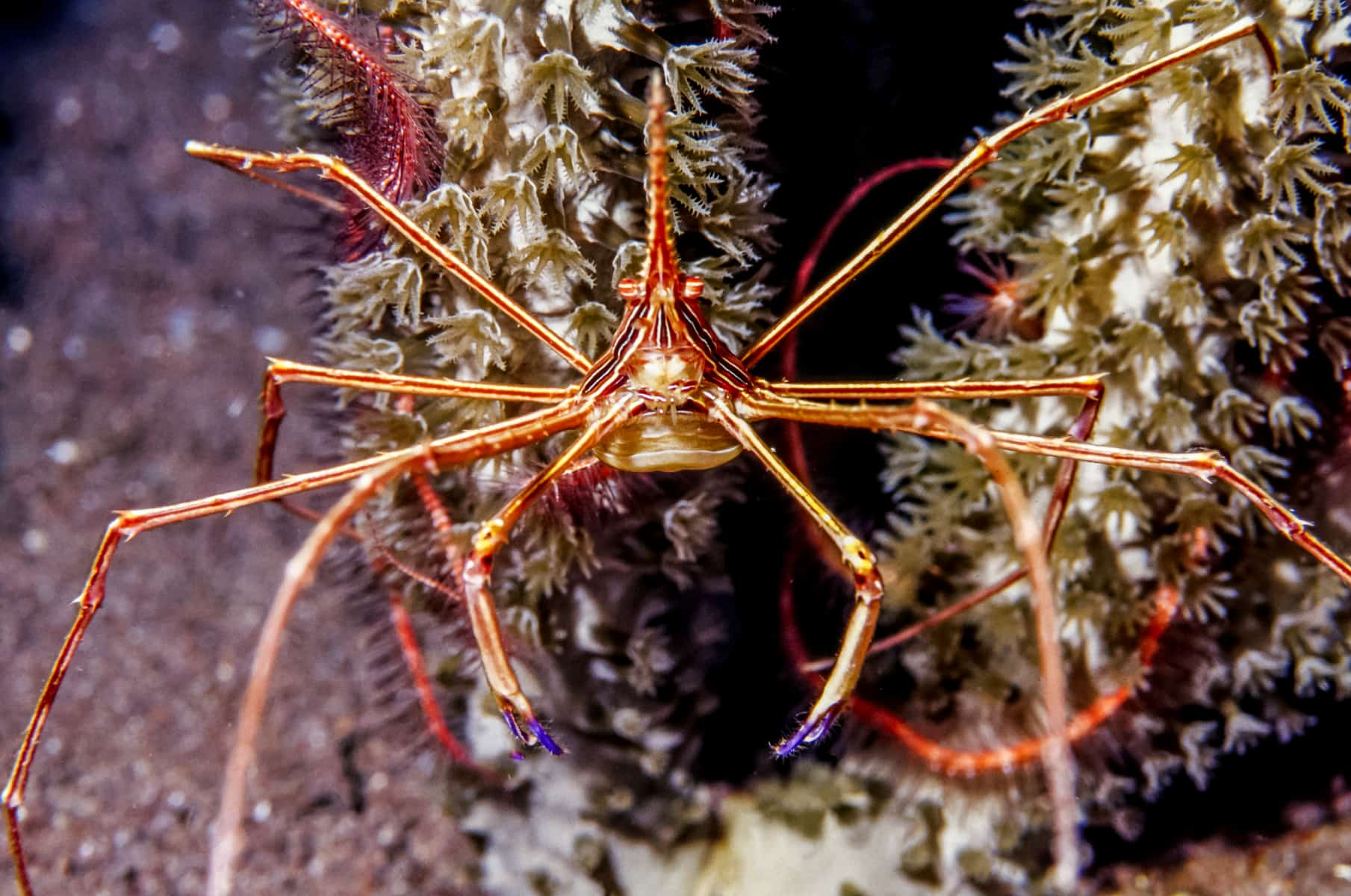 How To Care For An Arrow Crab