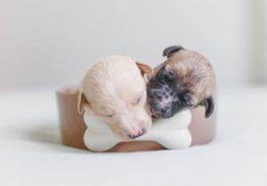 two puppies sleeping