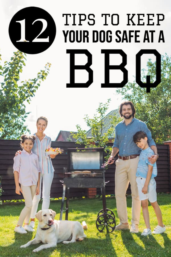 12 Tips to Keep Your Dog Safe At a BBQ
