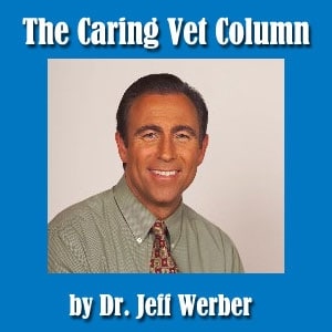 Dr. Jeff Werber