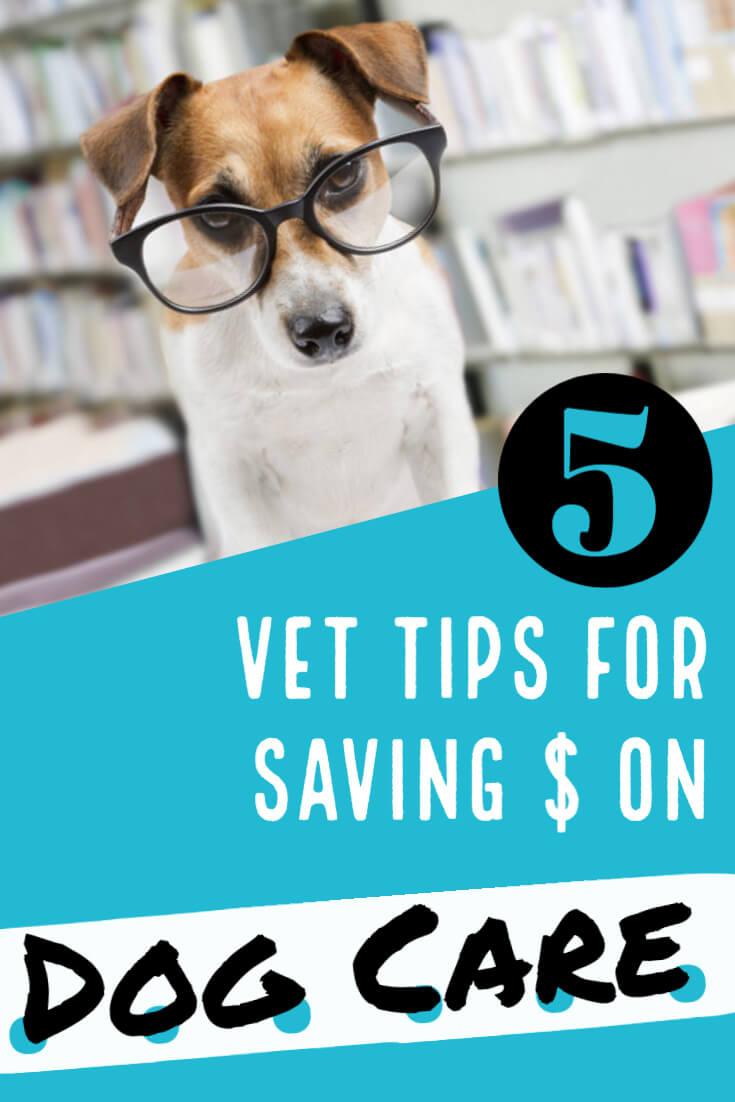 Vet Tips for Saving Money on Your Dog's Care