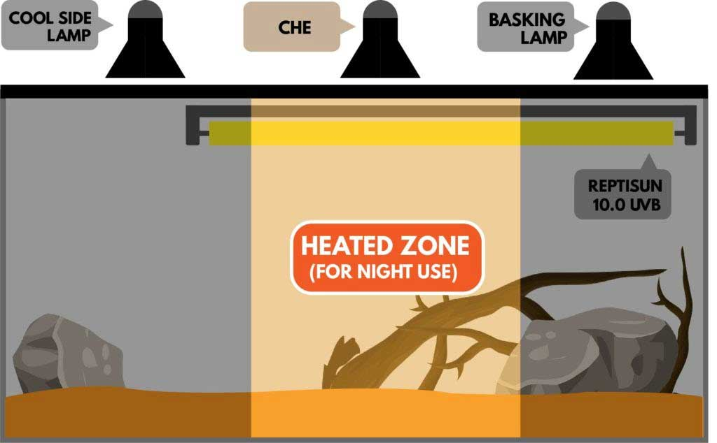 bearded dragon CHE lighting heat zone