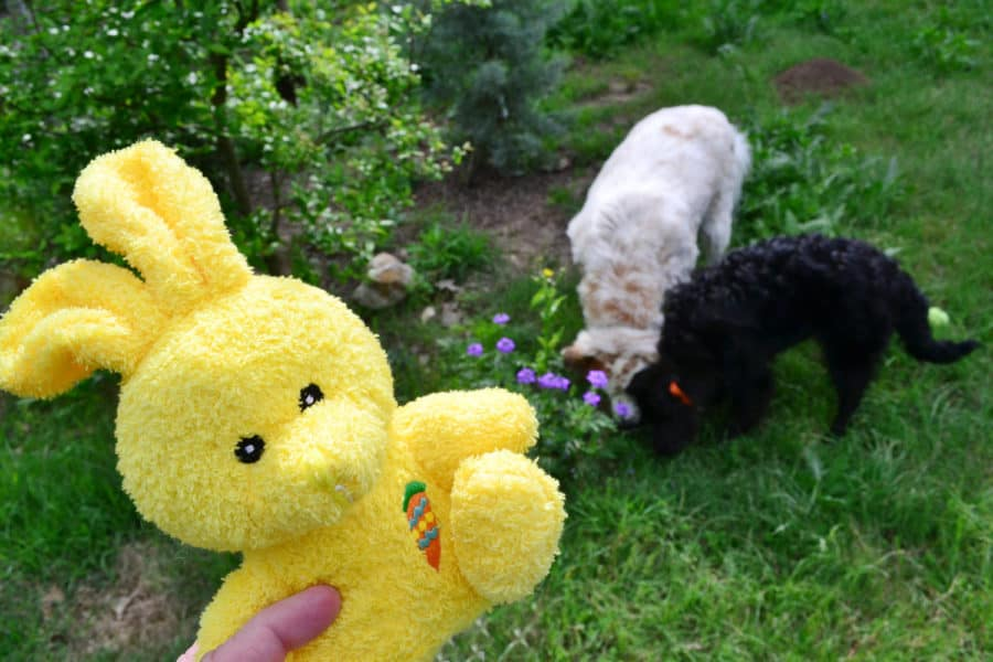 dogs hunting easter eggs
