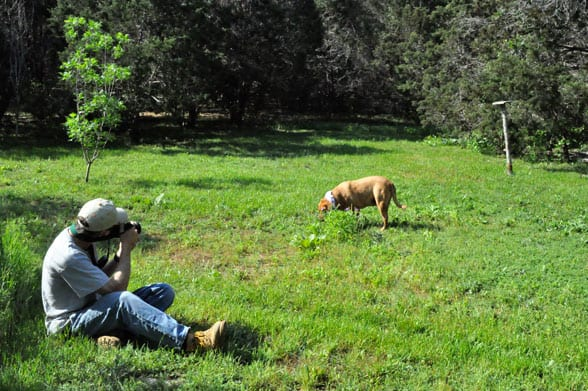 photo of dog hunting easter eggs
