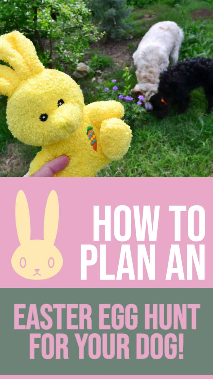 how to plan an easter egg hunt for your dog