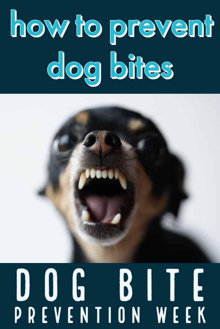 How to prevent dog bites -- dog bite prevention week