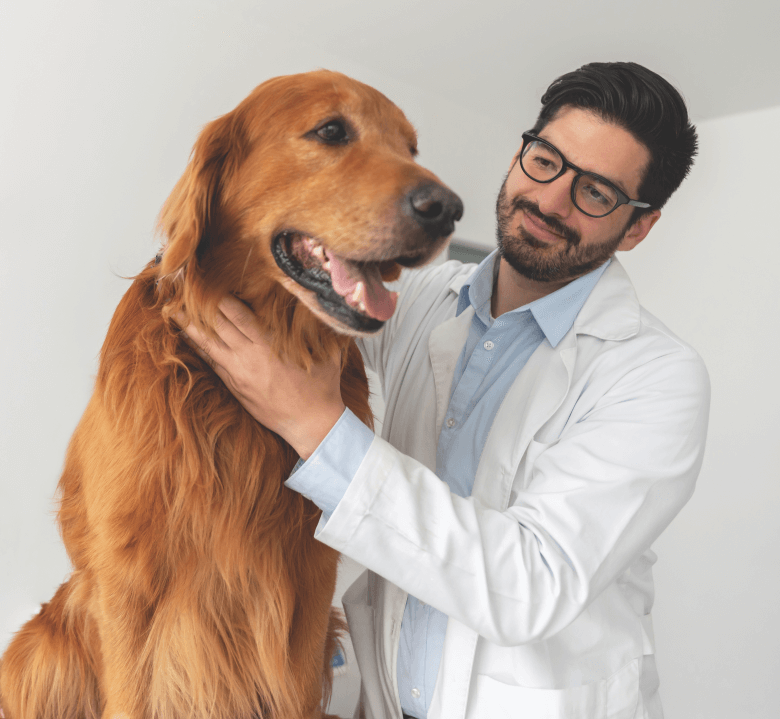 how to help all dogs fight cancer