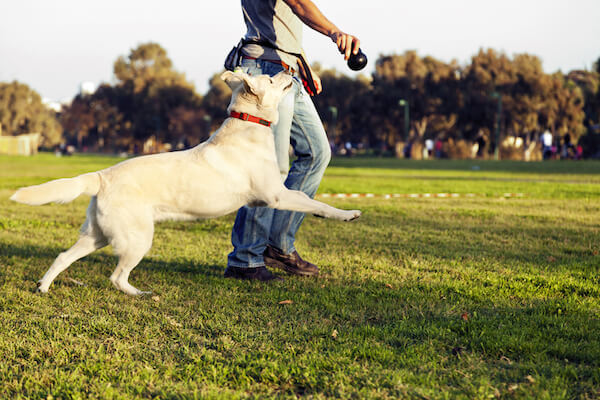 Man and dog playing fetch by Shutterstock. too many walks, too much excerise