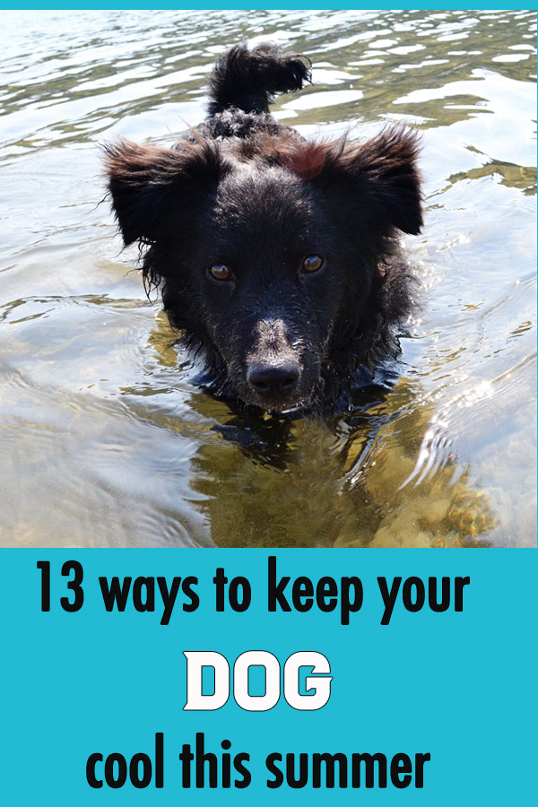 13 ways to keep your dog cool this summer #dogs