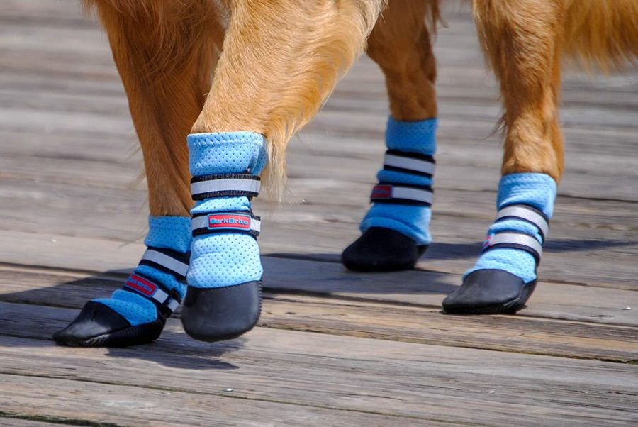 dog wearing booties in summer