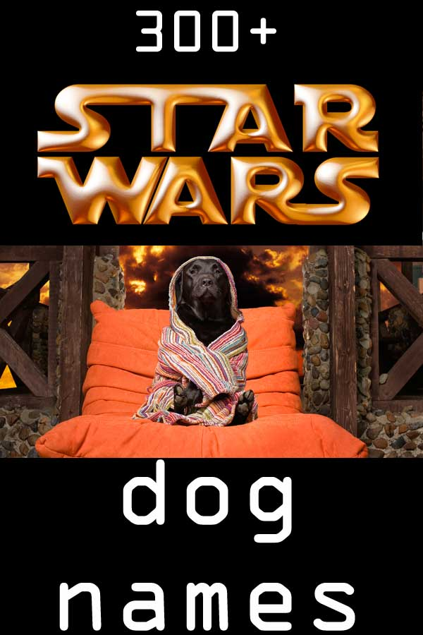 300+ Star Wars dog name choices