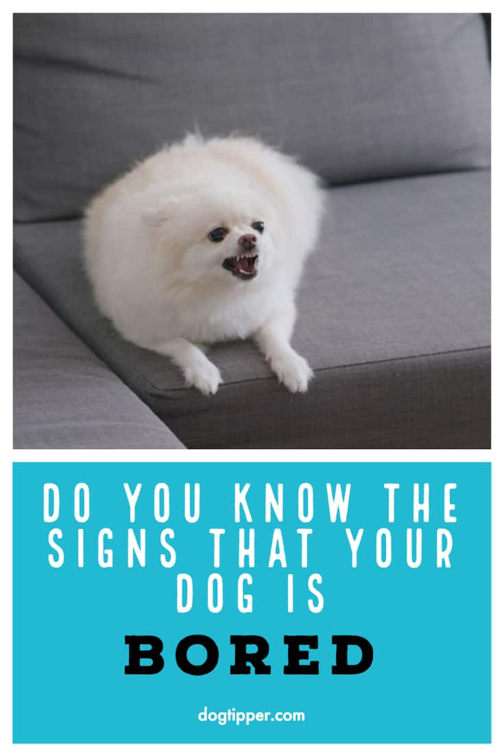 Signs Your Dog is Bored!