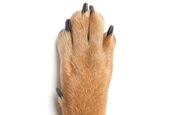 A dog paw.