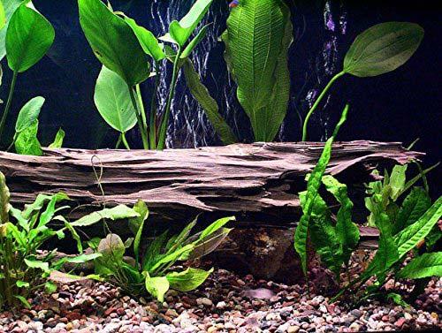 driftwood in aquarium