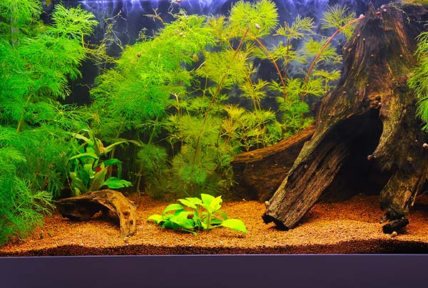 sand substrate aquarium
