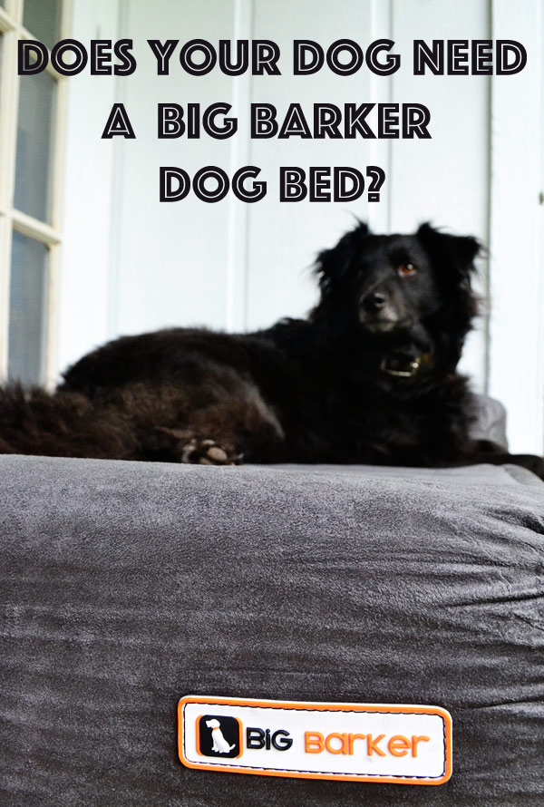 Does your dog need a Big Barker dog bed?