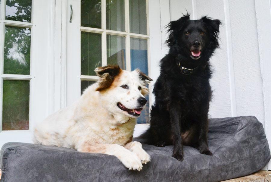 Large size orthopedic dog bed