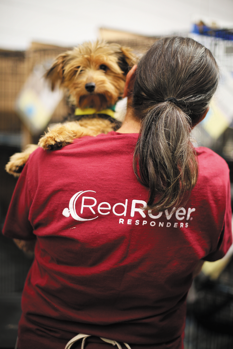 Disaster Relief for pets