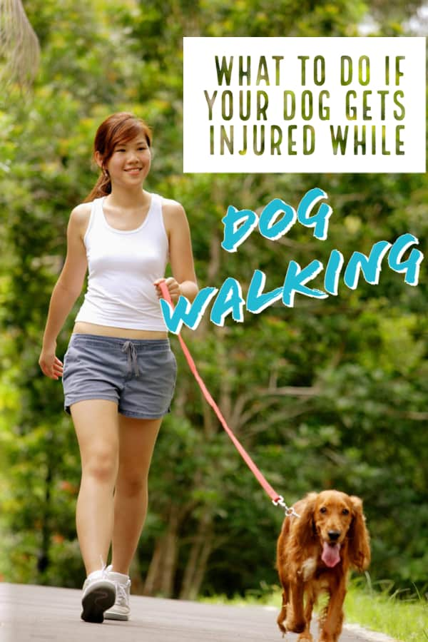 What to Do If Your Dog Gets Injured On a Dog Walk