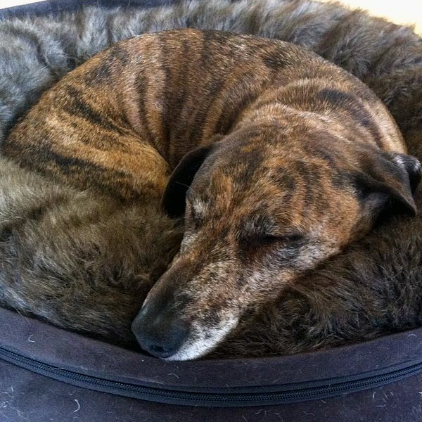 A dog asleep in a bed.