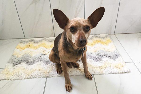 A scared dog in a bathroom.