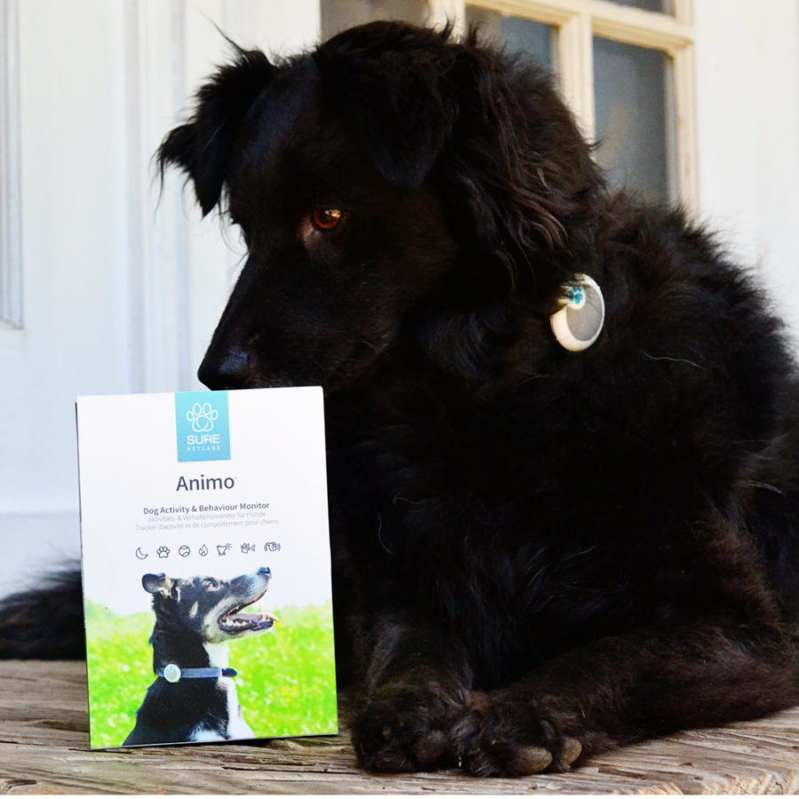 Animo Dog Activity and Behavior Monitor review
