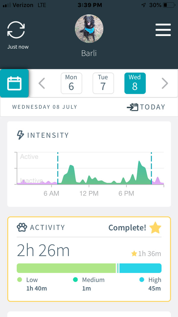 Animo Dog Activity and Behavior Monitor -- dashboard