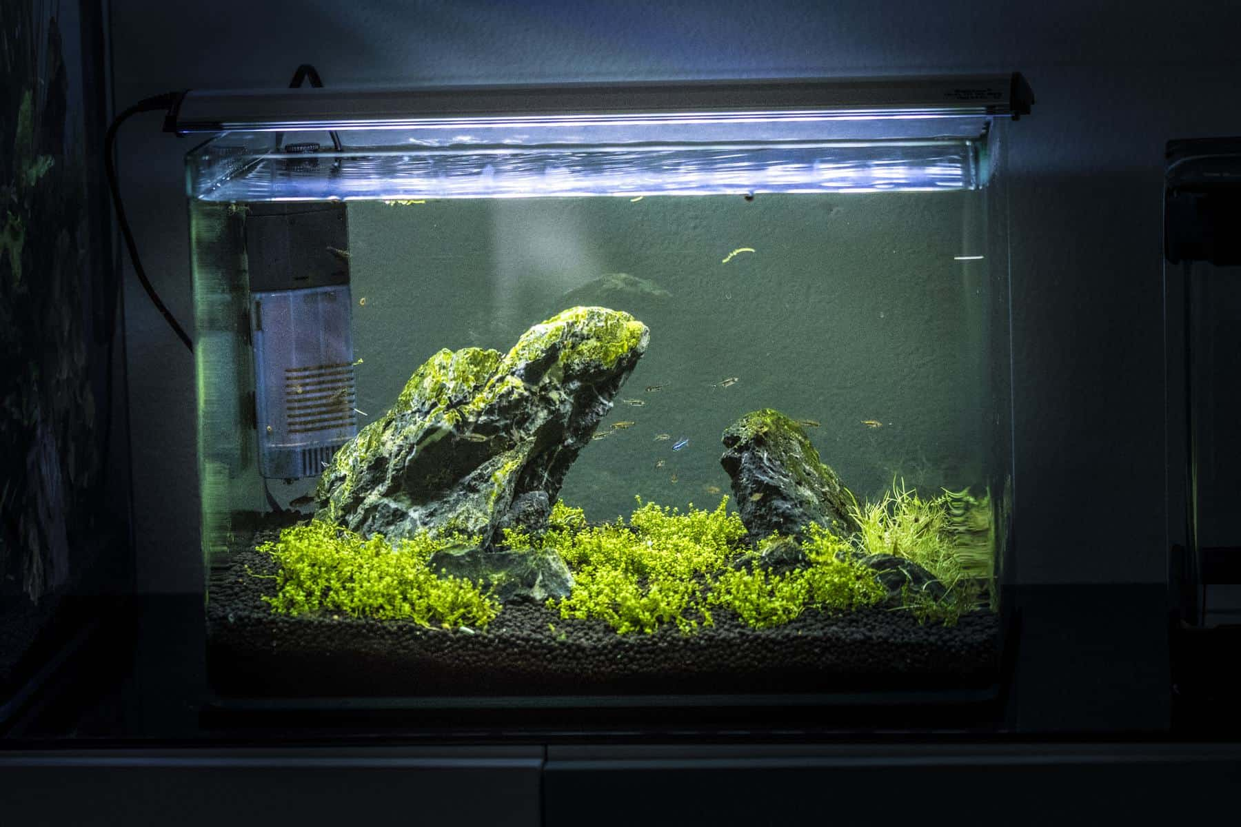 20 gallon freshwater small planted aquarium