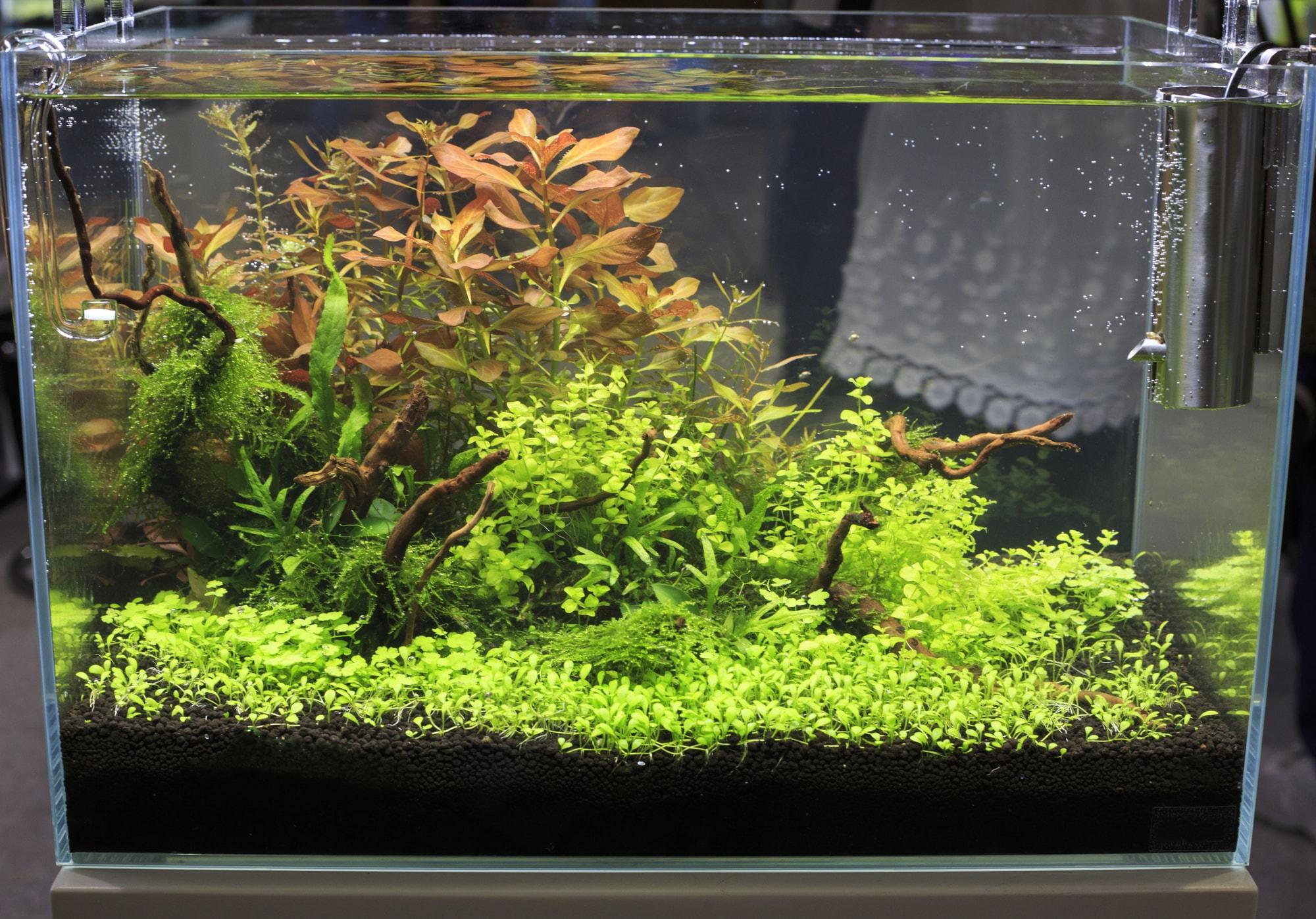 10 gallon freshwater aquarium fish tank