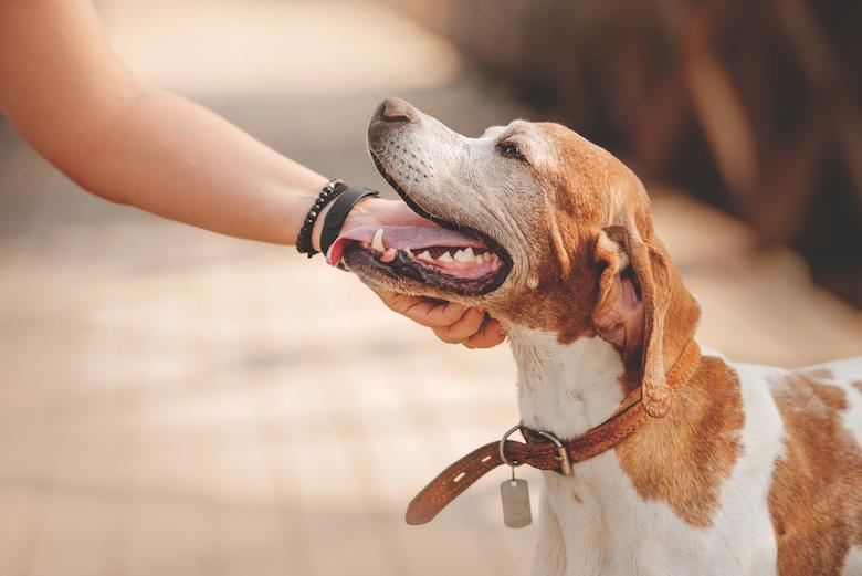 Rescue Dog Runaways