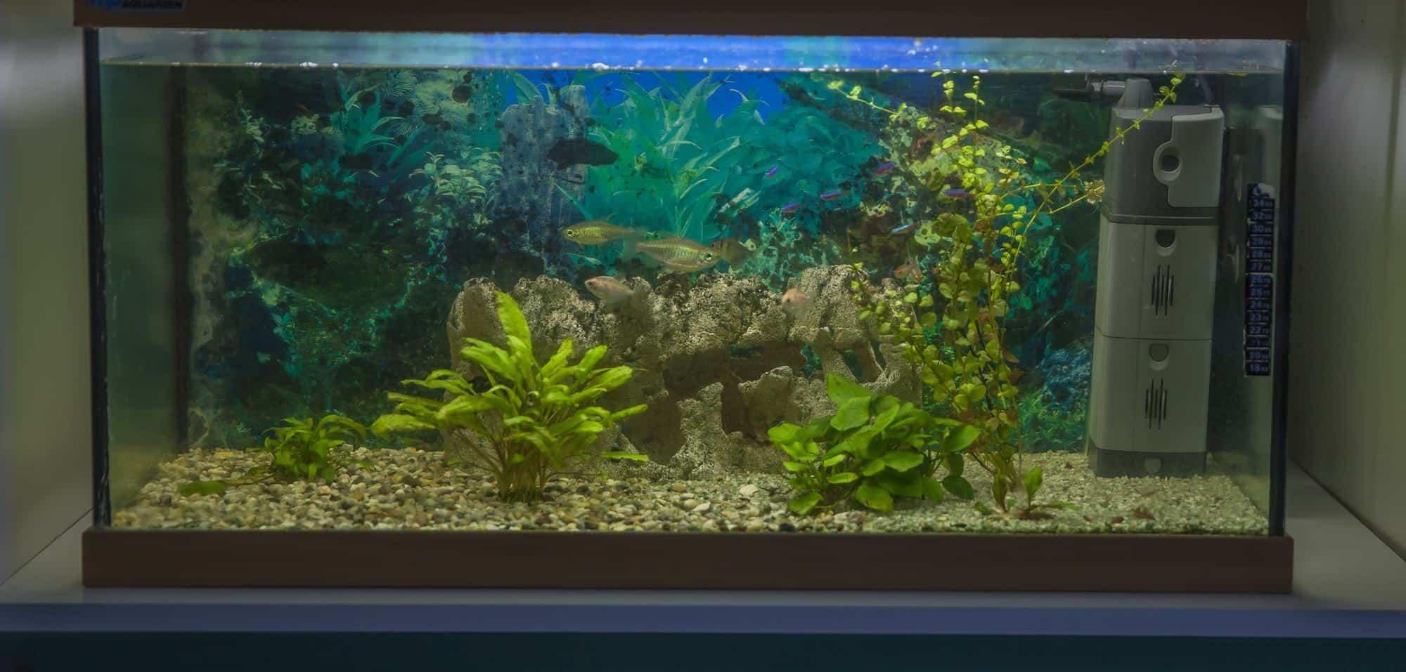 75 gallon freshwater aquarium