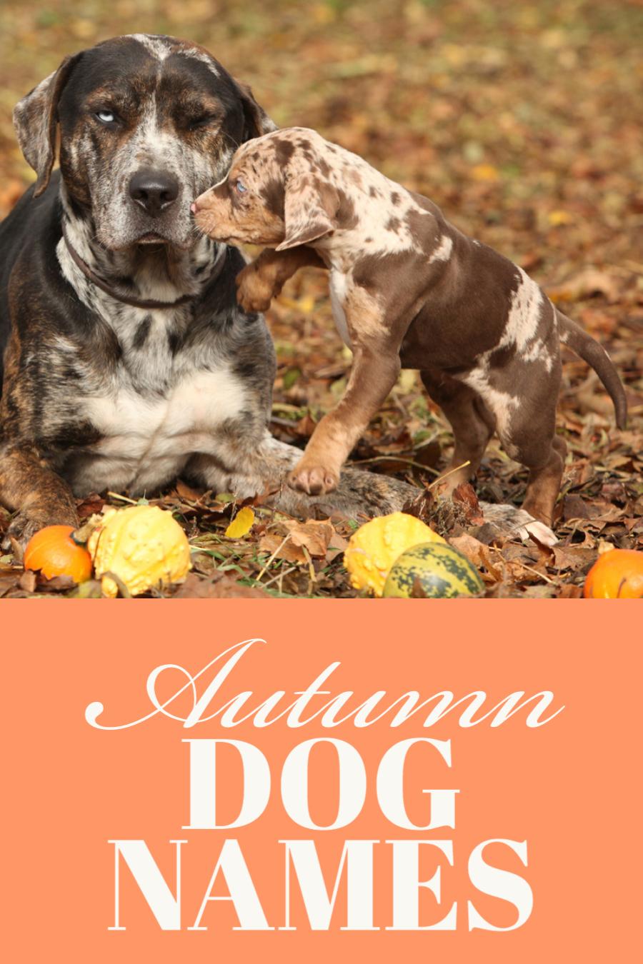 Autumn Dog Names