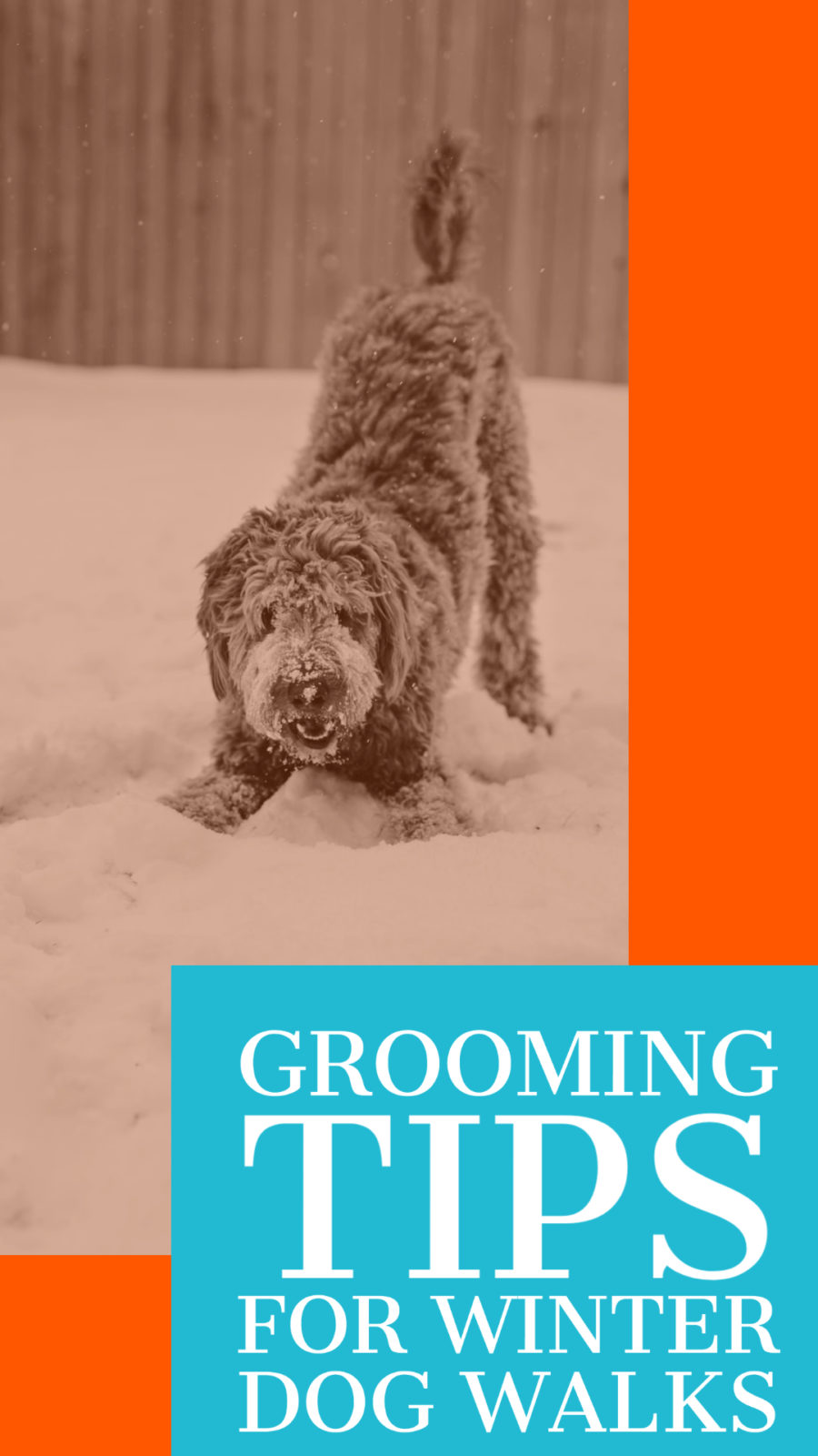 grooming tips for winter dog walks