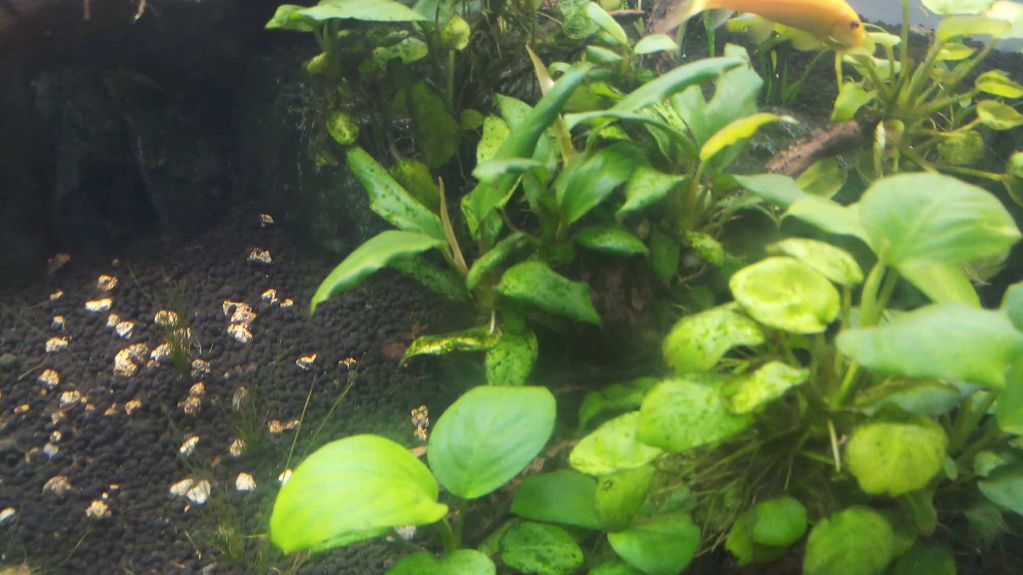 aquatic plants with brown algae