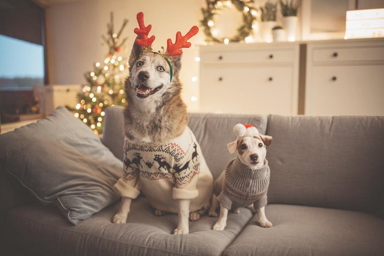 Christmas with your dog