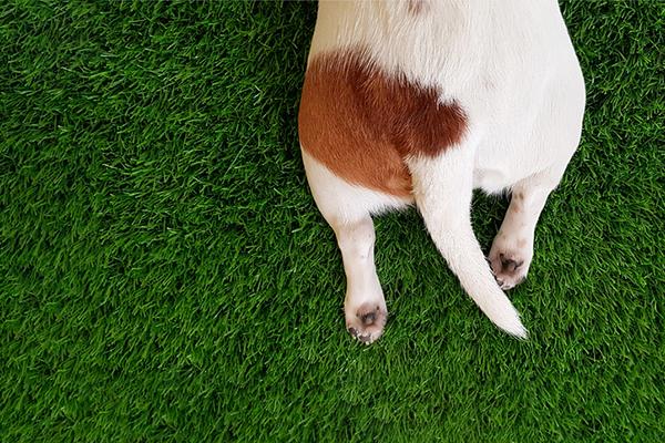 Closeup of a dog tail.