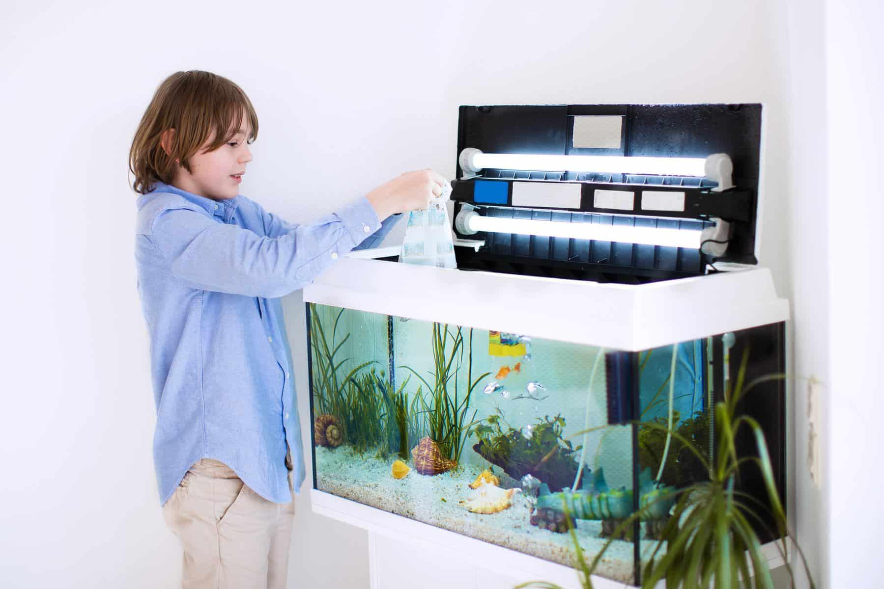 child putting distilled water in aquarium