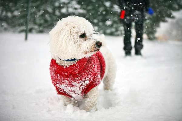 Winter-Proof Your Dog