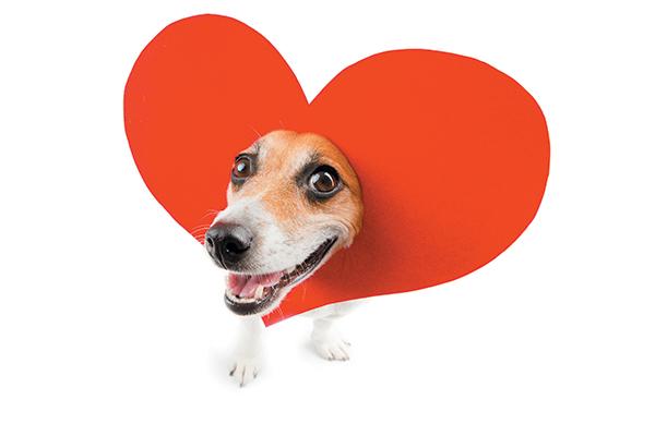 Dog Treat Recipe Valentine's Day