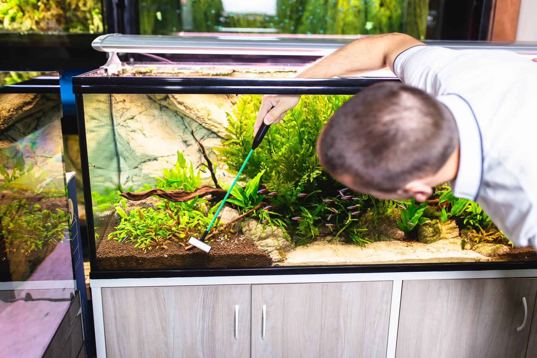 man cleaning aquarium