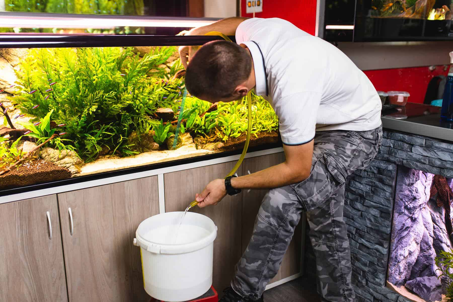 man changing water in aquarium