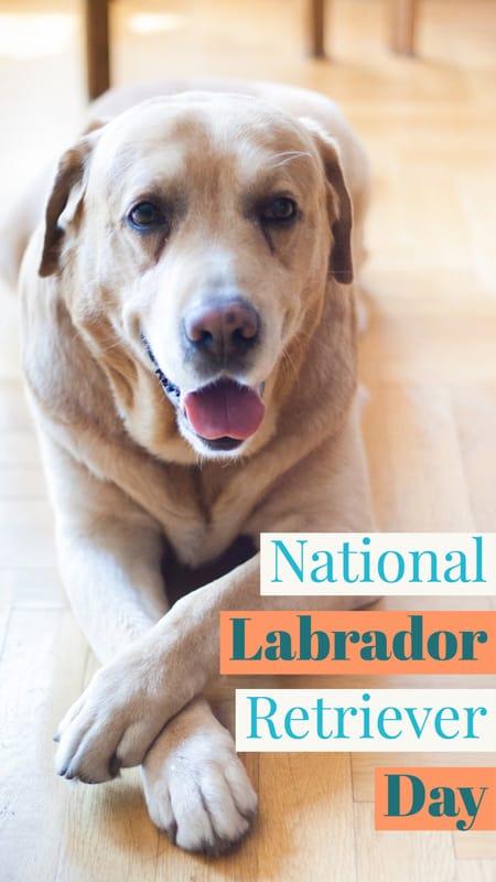 National Labrador Retriever Day Jan. 8