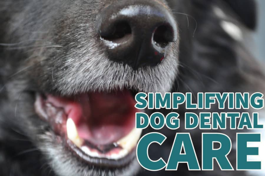Simplifying Dog Dental Care with Suchgood #sponsored