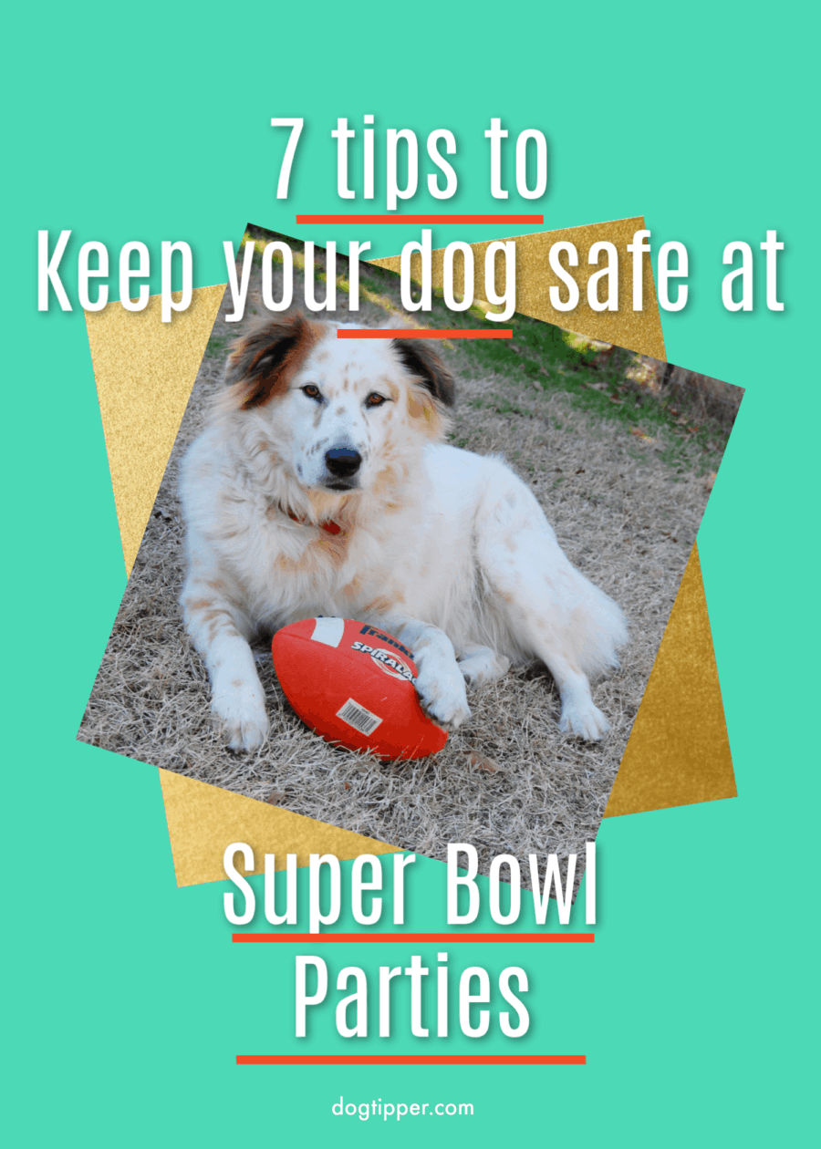 7 Tips to Keep Your Dog Safe at a Super Bowl Party