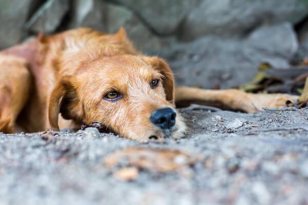 An abandoned dog.